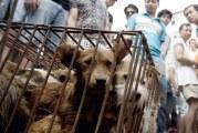 """مدينة صينية تتجه لحظر تناول القطط والكلاب والثعابين لمكافحة """"كورونا"""""""