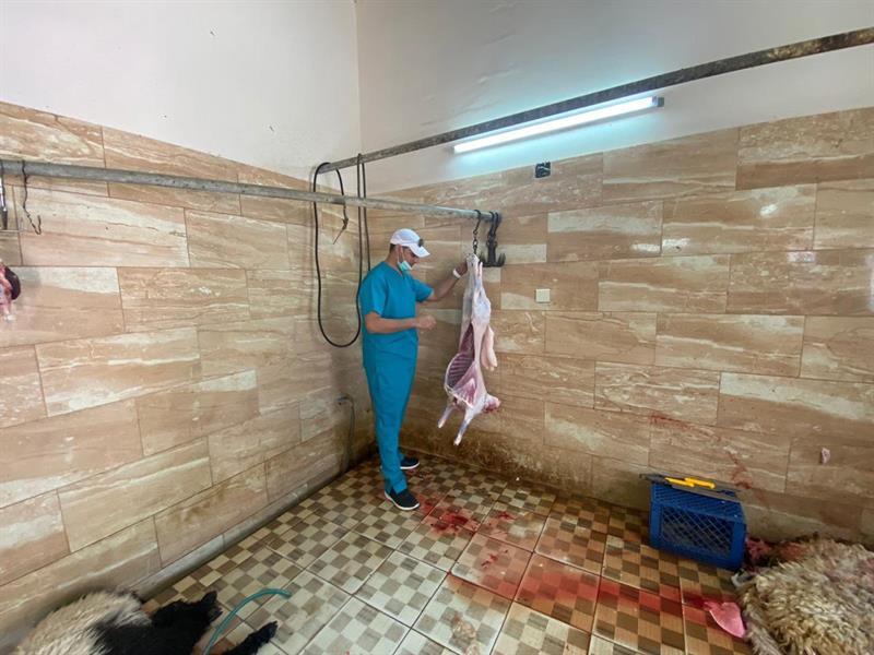 صور.. ضبط مَسلخين عشوائيين بالأحساء وإتلاف 250 كيلوجراما من اللحوم الفاسدة