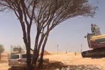 زراعة أشجار برية على طريق الملك سلمان بالرياض (فيديو)