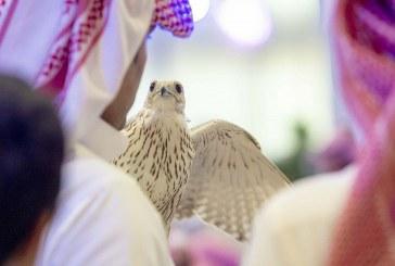 مبيعات الصقور تتجاوز 3 ملايين ريال في معرض الصقور والصيد السعودي