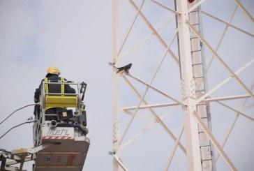 """""""مدني الرياض"""" ينقذ صقراً علق بأحد أبراج الاتصالات ويسلمه لصاحبه (صور)"""