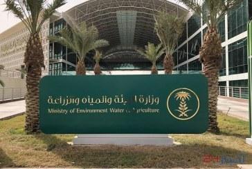 """""""البيئة"""": 9 وظائف شاغرة للسعوديين في مشروع تقديم المساعدات لصغار المزارعين بجازان"""