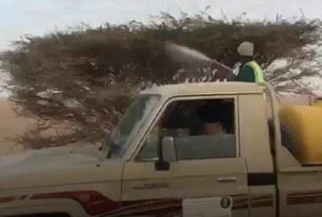 """""""البيئة"""": أعمال رش الجراد ليس لها صلة بمقاطع نفوق الإبل"""