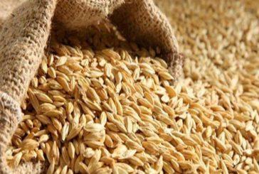 مؤسسة الحبوب تحدد سعر كيس الشعير بعد زيادة ضريبة القيمة المضافة