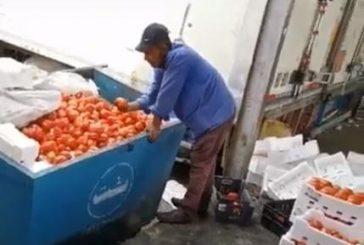 بلدية خميس مشيط تعلّق على فيديو تعبئة عمالة للطماطم من صندوق النفايات