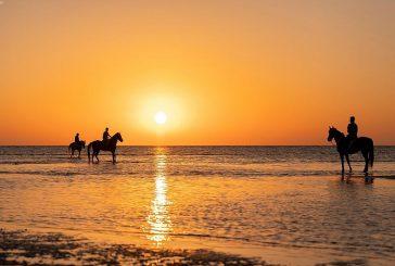 عروض خيالة أملج على شواطئ المحافظة تخطف الأنظار