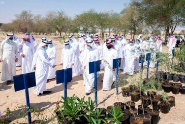 رئيس جامعة الملك فيصل يفتتح مشروع غرس (45) ألف شتلة وشجرة في واحة الأحساء