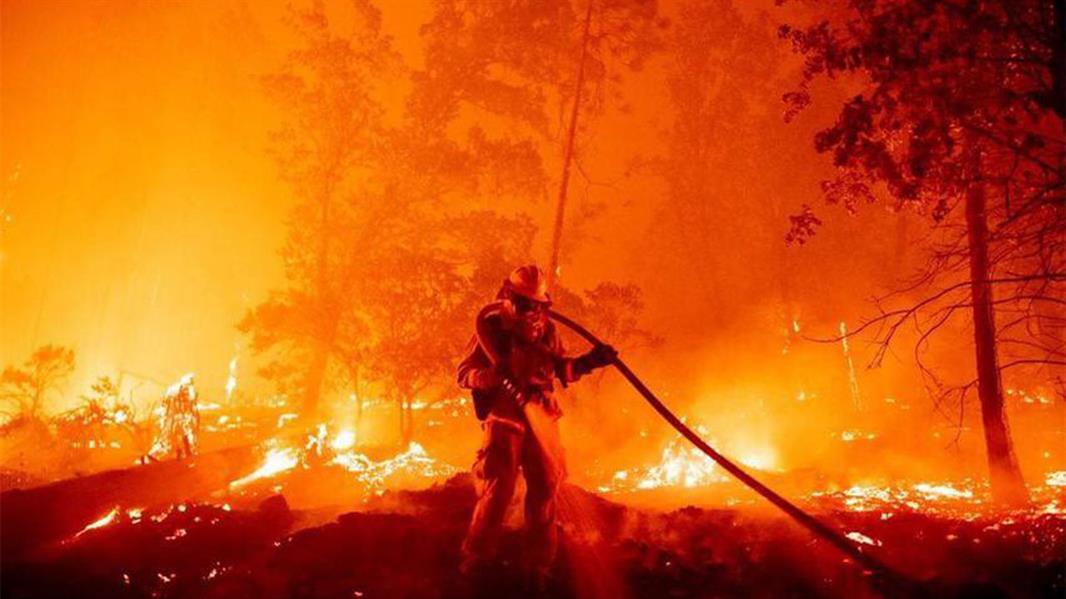 """""""البيئة"""": نعكف على خطة لإعادة تأهيل الغابات المتأثرة بالحريق في تنومة"""