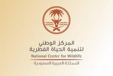 إطلاق 20 وعلاً جبلياً في منتزه بلجرشي الوطني برعاية وكيل إمارة الباحة