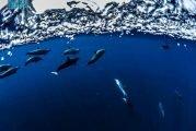 مشروع البحر الأحمر يقدم أنموذجاً عالمياً في إنتاج المياه باستخدام الطاقة المتجددة