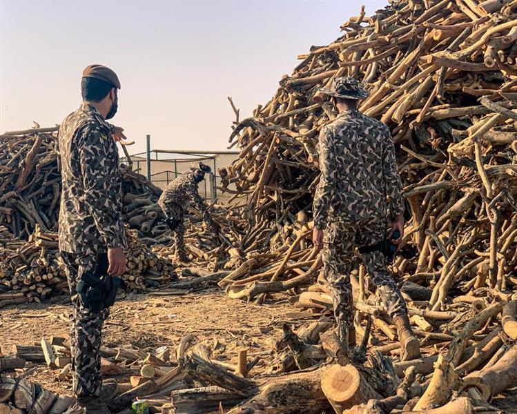 ضبط 50 مواطنا لبيعهم حطبًا محليًا لأغراض تجارية في الرياض