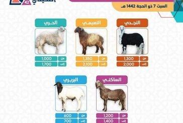 مهرجان أضحيتي ببريدة يطلق مؤشراً لأسعار الأضاحي