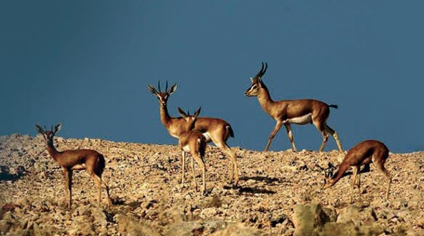 """""""البيئة"""" تُحدد المقابل المالي لدخول المحميات والمتنزهات وصيد واقتناء الحيوانات والاحتطاب"""