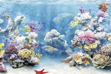 اكتشاف مستعمرة مرجانية ضخمة في جزيرة
