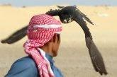 نادي الصقور: السماح بصيد طيور الحباري بدءاً من 1 نوفمبر المقبل