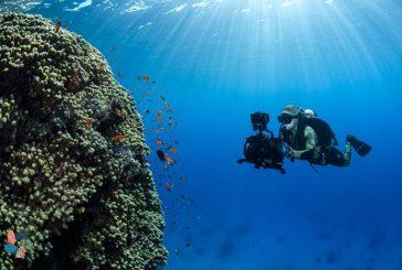 نيوم تُعلن اكتشاف كائنات بحرية عملاقة ونادرة وجزر جديدة في شمال البحر الأحمر